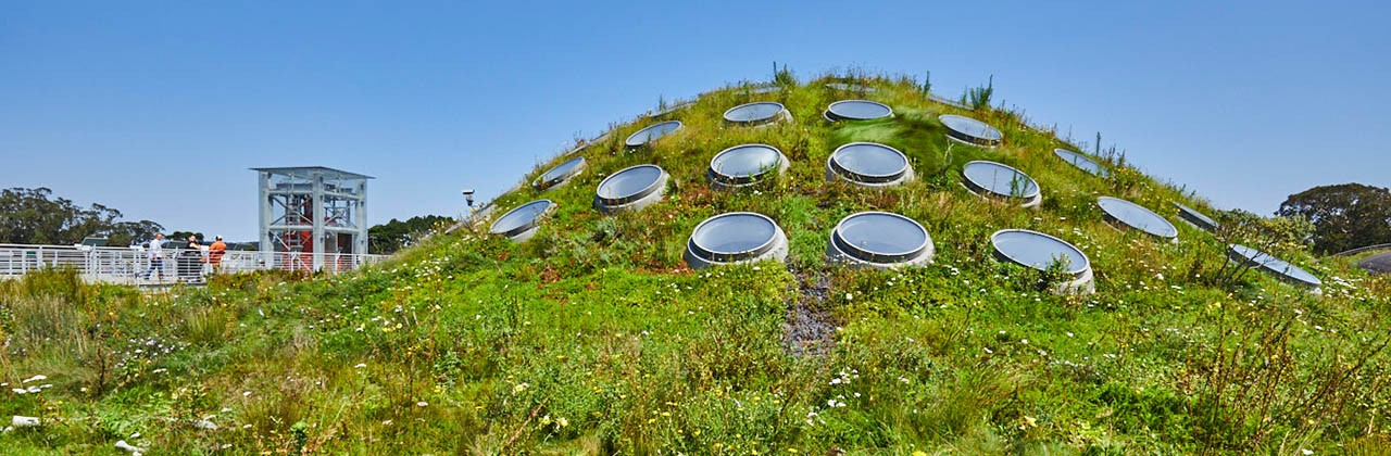 The living roof at the Academy of Sciences at Golden Gate Park in San Francisco.