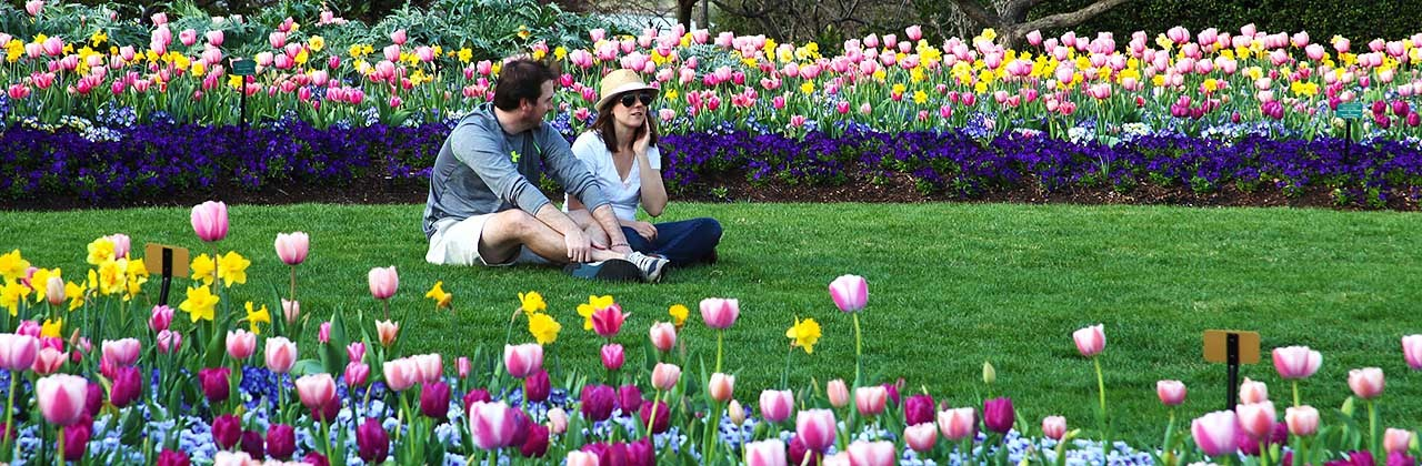 A couple sit surrounded by blooming tulips at the Dallas Arboretum