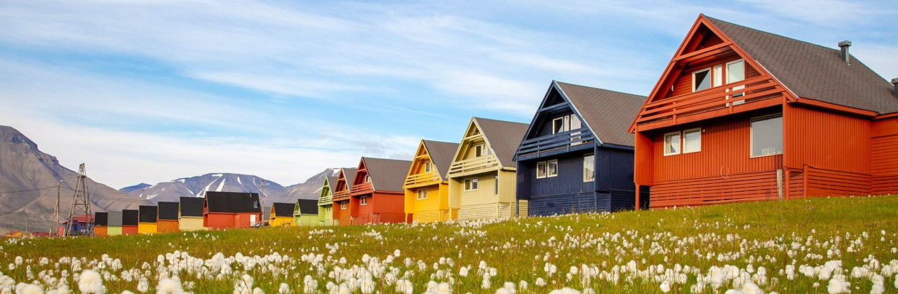 Colorful houses in front of a field of flowers in Longyearbyen, Svalbard, Norway