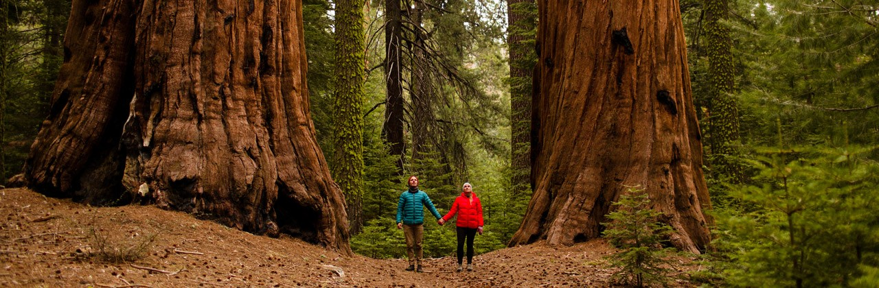 692737063-sequoia-kings-canyon-national-park-trees-couple-trunks