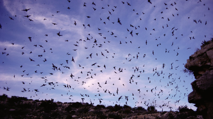 A swarm of bats outside Carlsbad Caverns