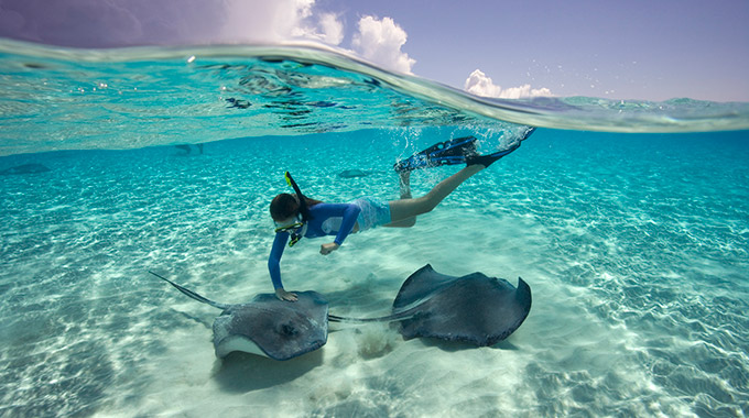 A snorkeler swims with stingrays.