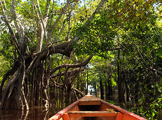 A view from a canoe in a flooded Amazon forest