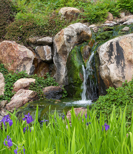 Irises add a colorful touch to a serene, green scene at Quarryhill. | Photo by Mark Hullinger/Quarry Hill Sonoma's Botanical Garden