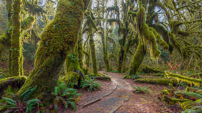 The Hall of Mosses trail in the Hoh Rainforest in Olympic National Park