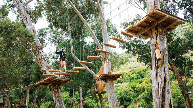 Catalina Aerial Adventure offers self-guided obstacle courses in the trees. | Photo by Vanessa Stump